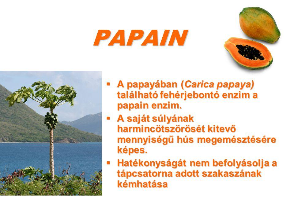 PAPAIN A papayában (Carica papaya) található fehérjebontó enzim a papain enzim.