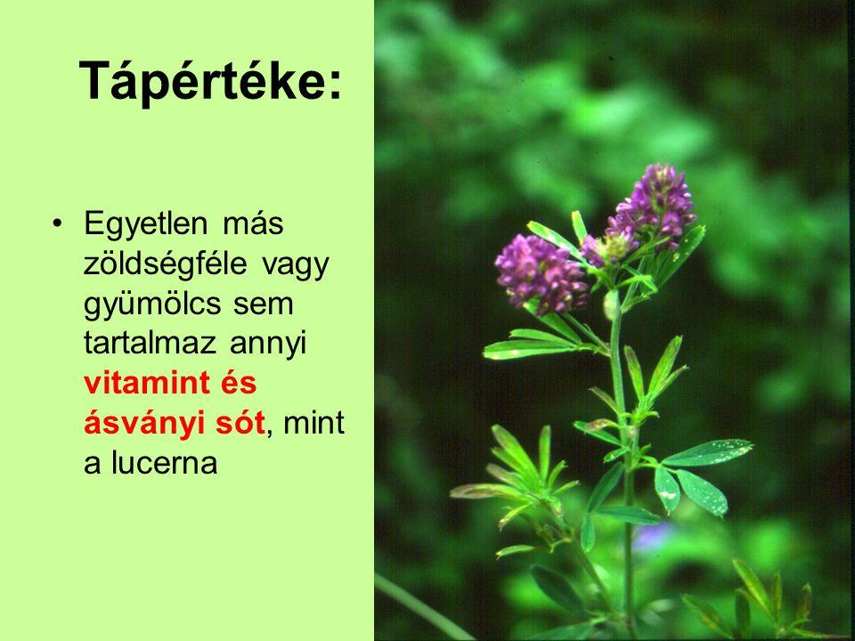 Tápértéke: Egyetlen más zöldségféle vagy gyümölcs sem tartalmaz annyi vitamint és ásványi sót, mint a lucerna.