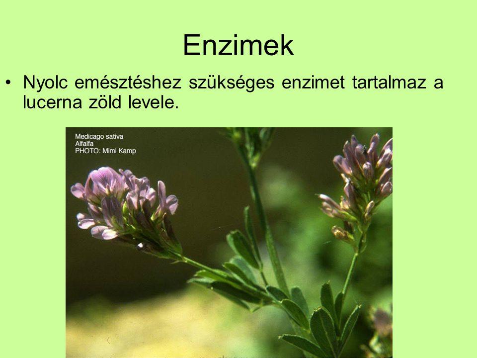 Enzimek Nyolc emésztéshez szükséges enzimet tartalmaz a lucerna zöld levele.