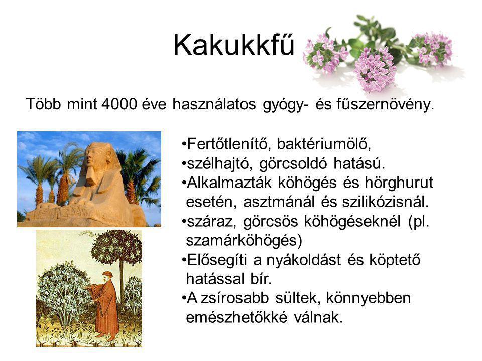 Kakukkfű Több mint 4000 éve használatos gyógy- és fűszernövény.