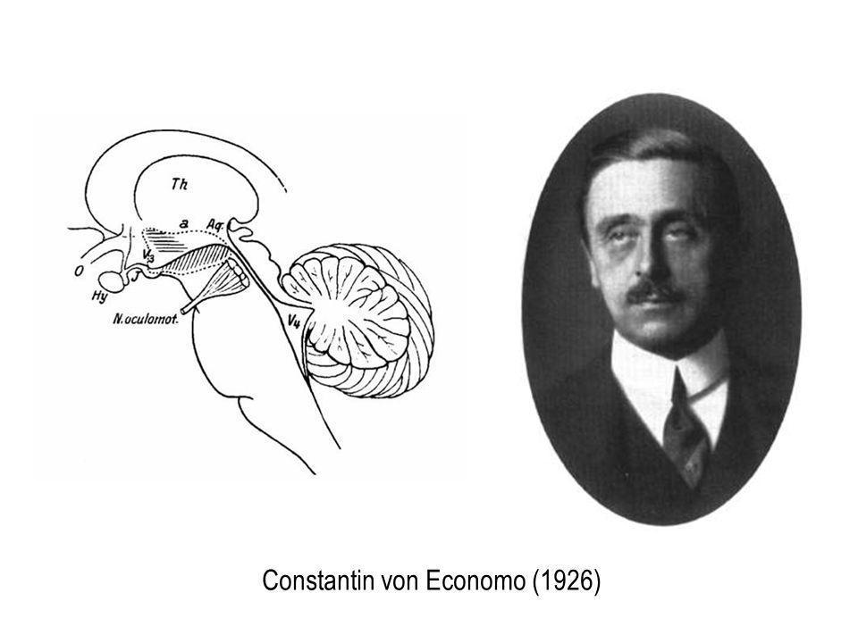 Constantin von Economo (1926)