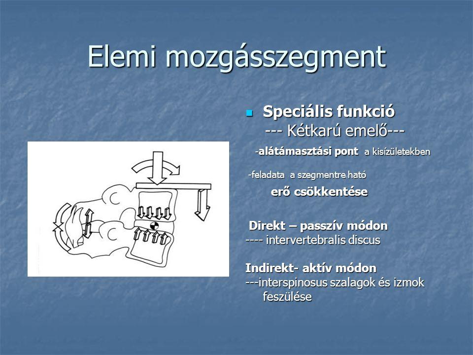 Elemi mozgásszegment Speciális funkció --- Kétkarú emelő---