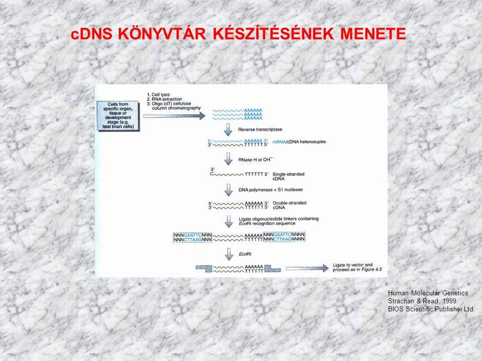 cDNS KÖNYVTÁR KÉSZÍTÉSÉNEK MENETE