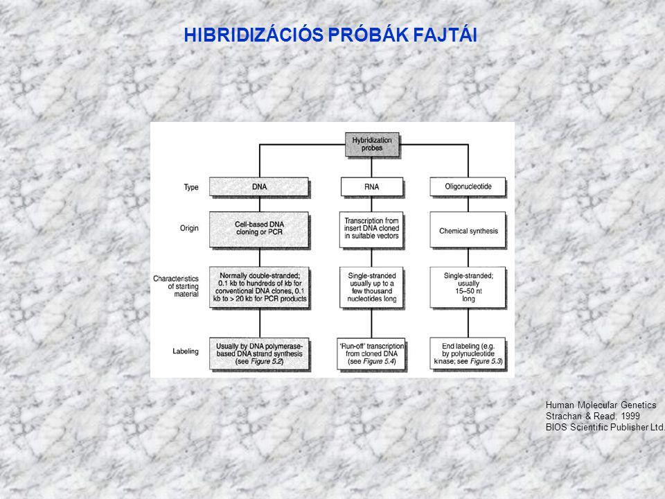 HIBRIDIZÁCIÓS PRÓBÁK FAJTÁI