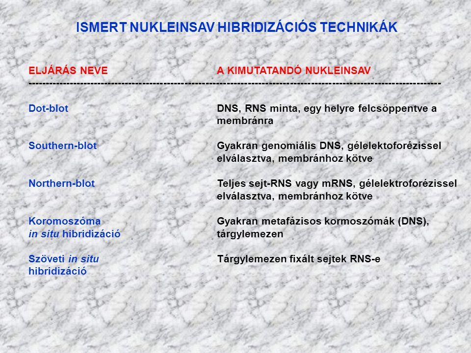 ISMERT NUKLEINSAV HIBRIDIZÁCIÓS TECHNIKÁK