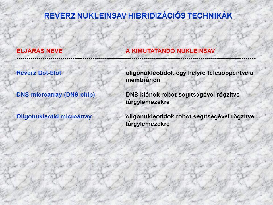 REVERZ NUKLEINSAV HIBRIDIZÁCIÓS TECHNIKÁK