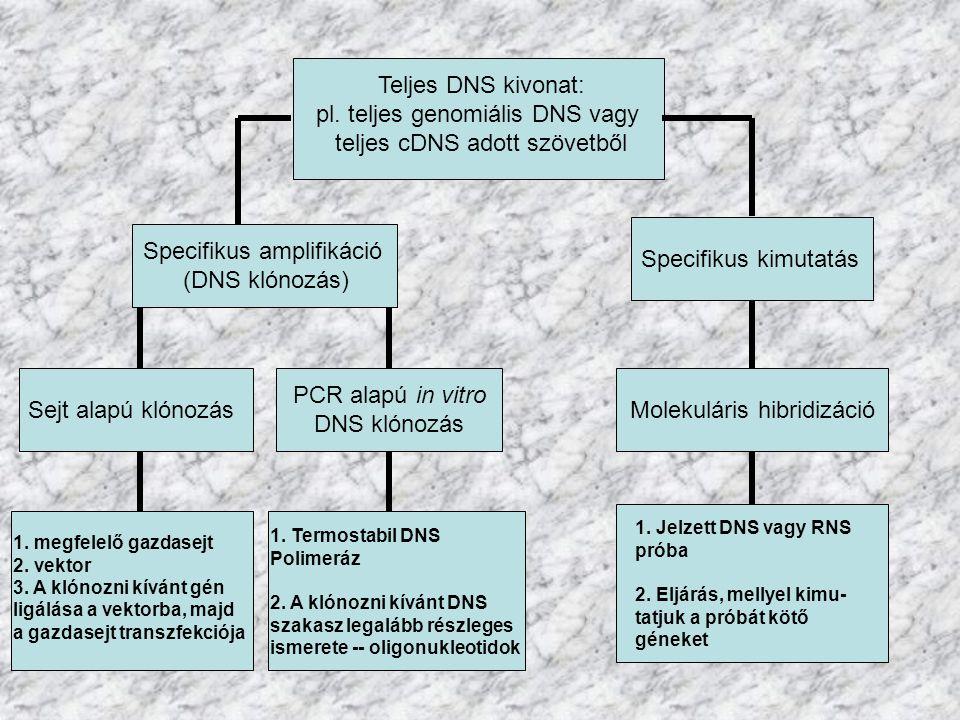 pl. teljes genomiális DNS vagy teljes cDNS adott szövetből