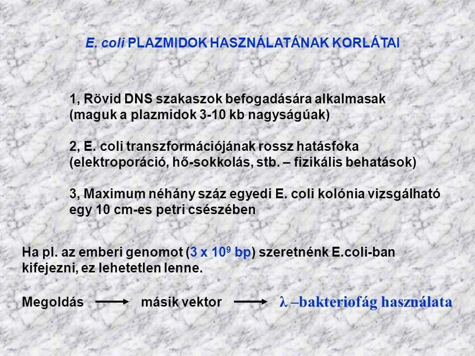 E. coli PLAZMIDOK HASZNÁLATÁNAK KORLÁTAI