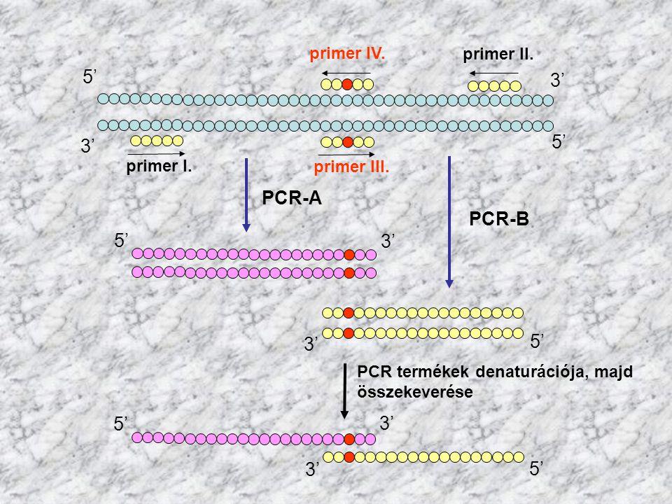 5' 3' 5' 3' PCR-A PCR-B 5' 3' 5' 3' 5' 3' 3' 5' primer IV. primer II.