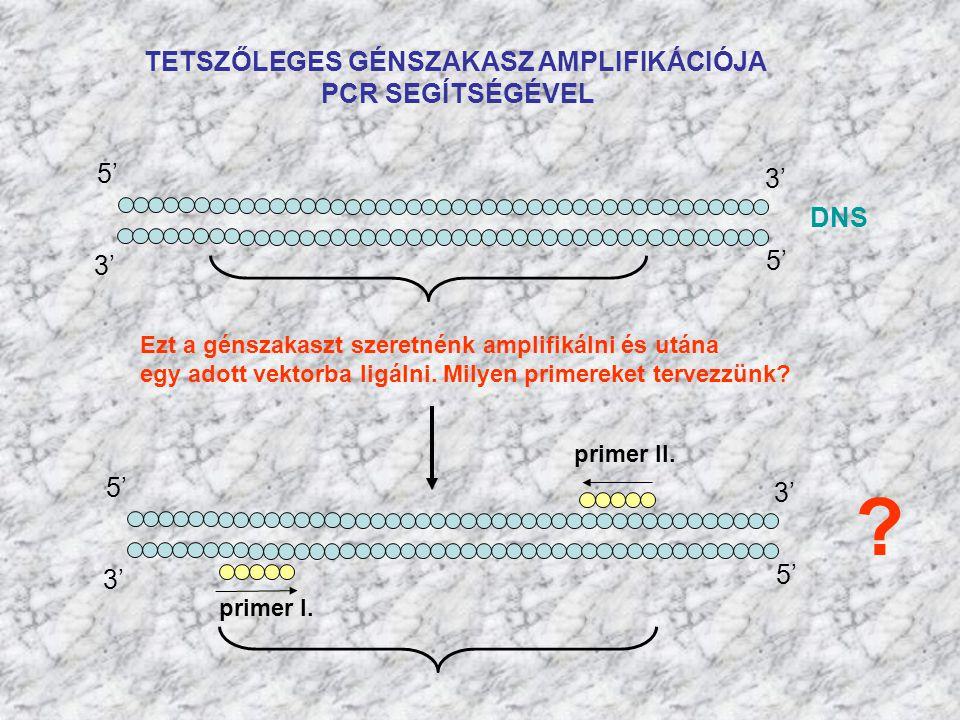 TETSZŐLEGES GÉNSZAKASZ AMPLIFIKÁCIÓJA