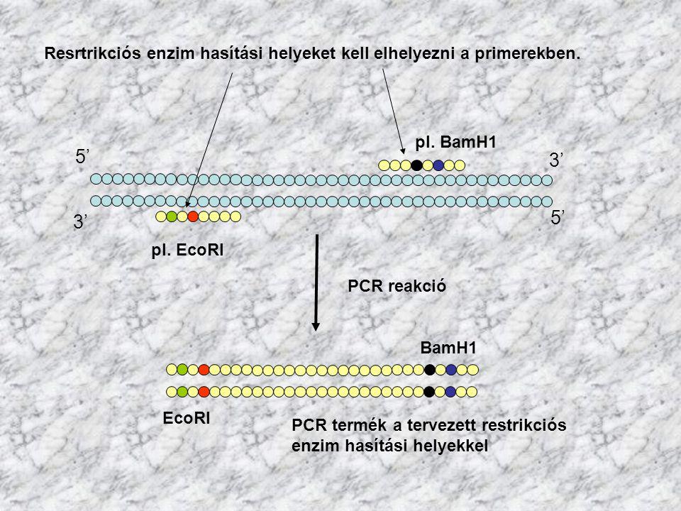 Resrtrikciós enzim hasítási helyeket kell elhelyezni a primerekben.