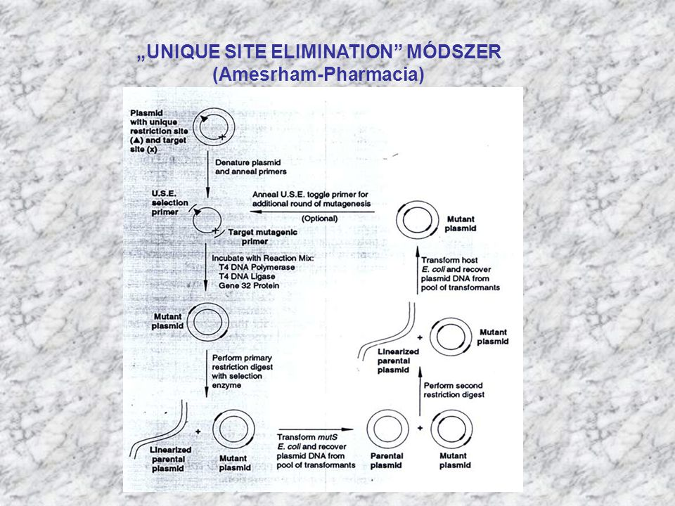 """UNIQUE SITE ELIMINATION MÓDSZER (Amesrham-Pharmacia)"