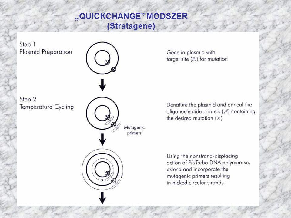 """""""QUICKCHANGE MÓDSZER"""