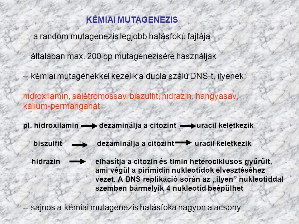 -- a random mutagenezis legjobb hatásfokú fajtája