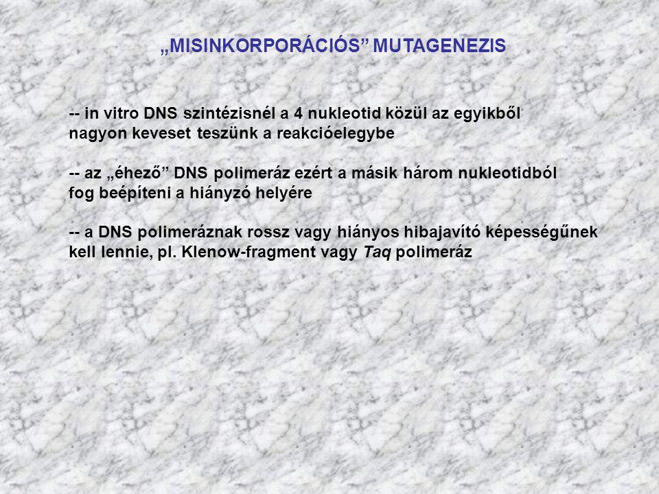 """""""MISINKORPORÁCIÓS MUTAGENEZIS"""