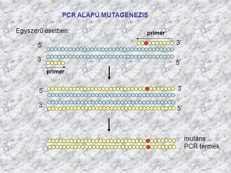 PCR ALAPÚ MUTAGENEZIS Egyszerű esetben: 3' 5' 3' 5' 3' 5' 3' 5' mutáns