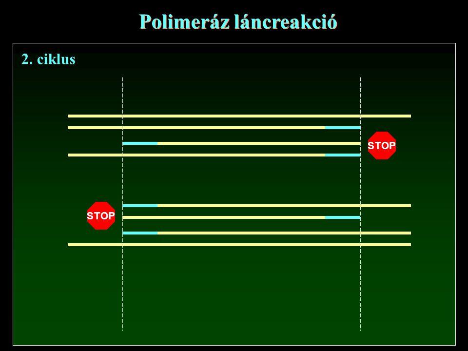 Polimeráz láncreakció