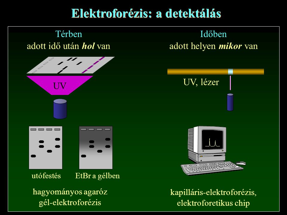 Elektroforézis: a detektálás