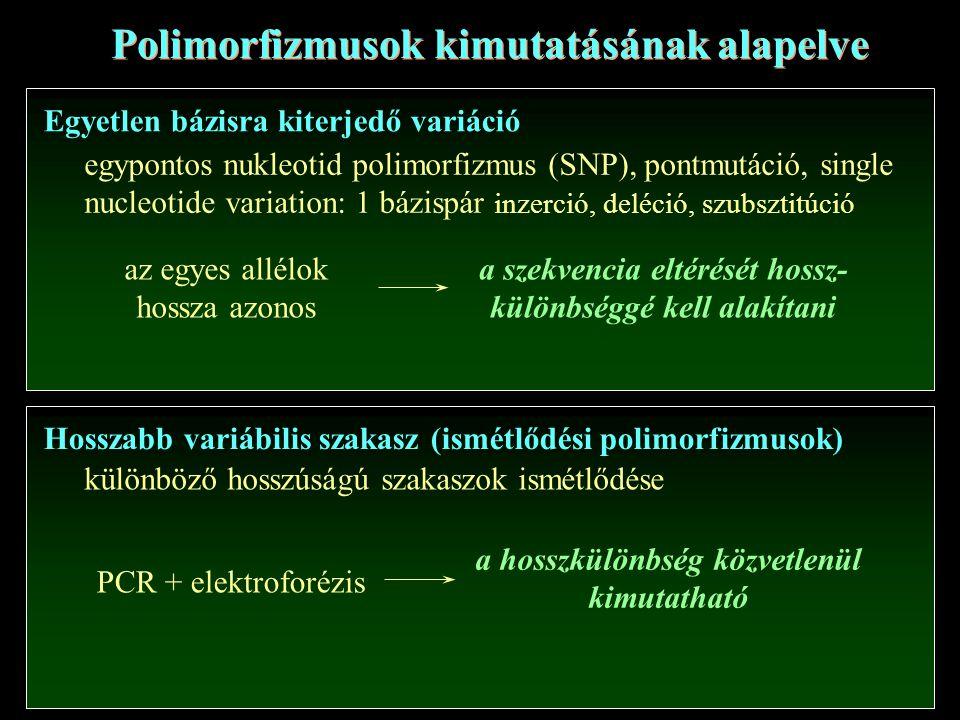 Polimorfizmusok kimutatásának alapelve