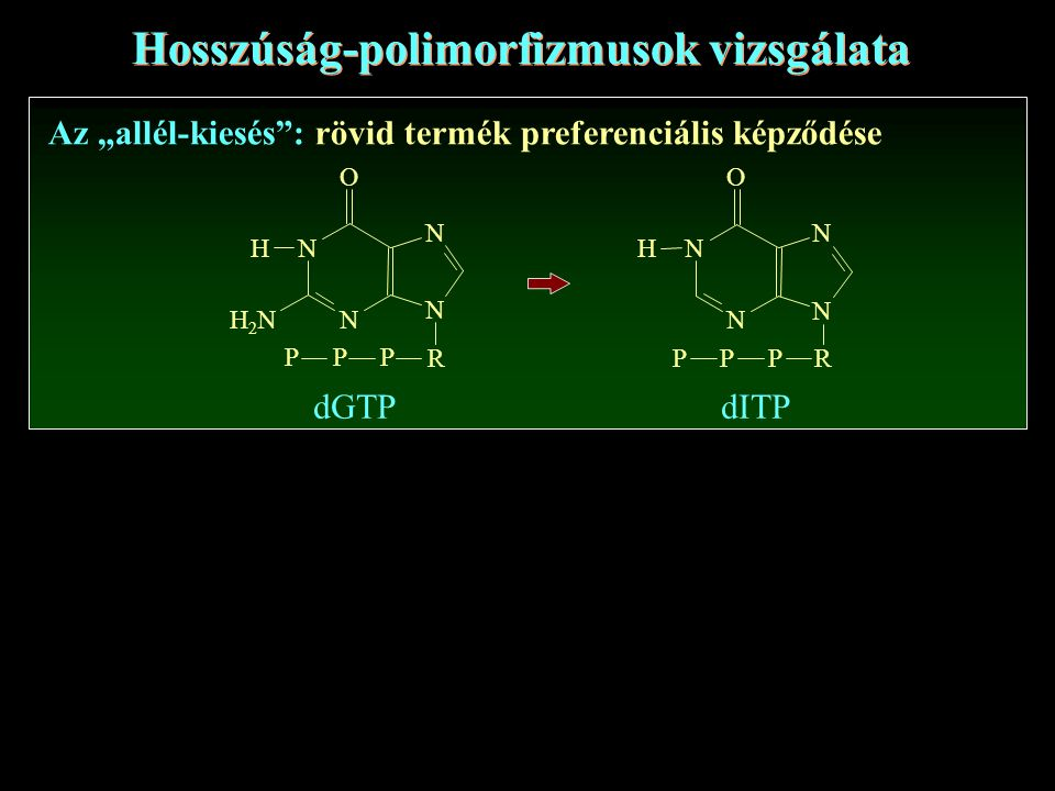 Hosszúság-polimorfizmusok vizsgálata