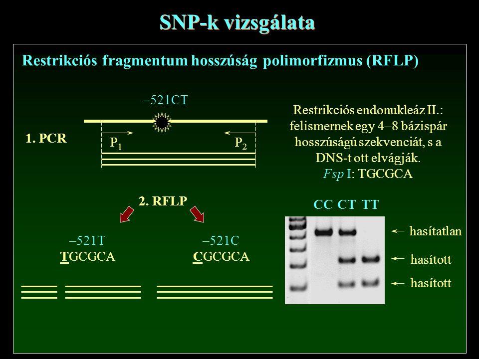 SNP-k vizsgálata Restrikciós fragmentum hosszúság polimorfizmus (RFLP)
