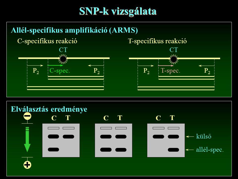 SNP-k vizsgálata Allél-specifikus amplifikáció (ARMS)
