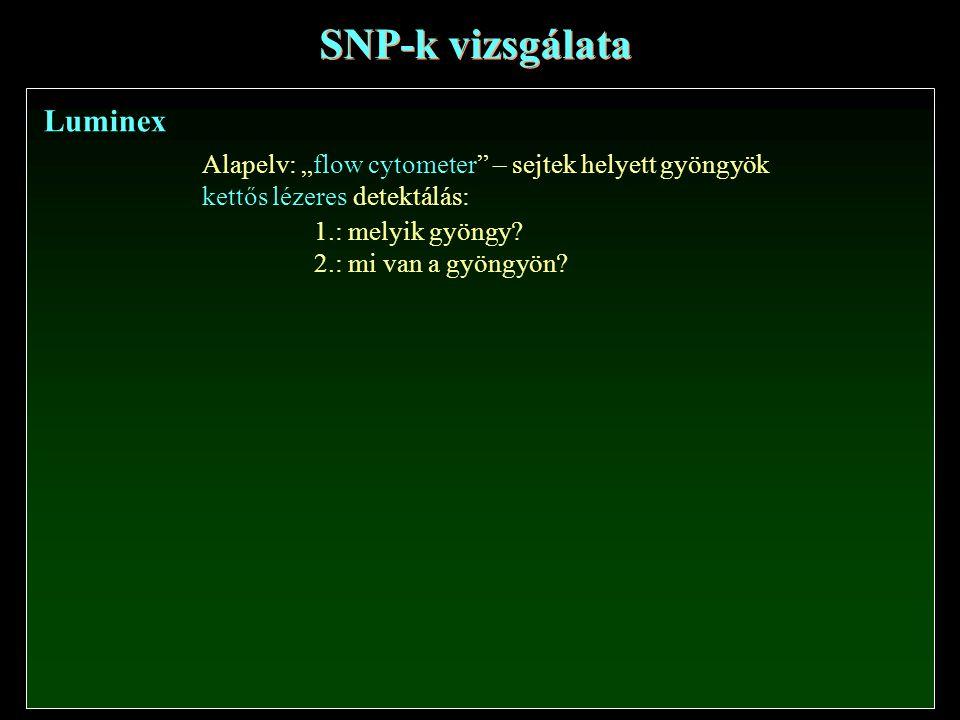 SNP-k vizsgálata Luminex