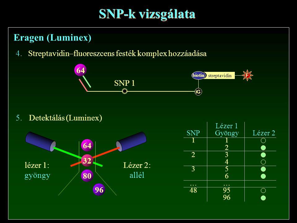 SNP-k vizsgálata Eragen (Luminex) 4.