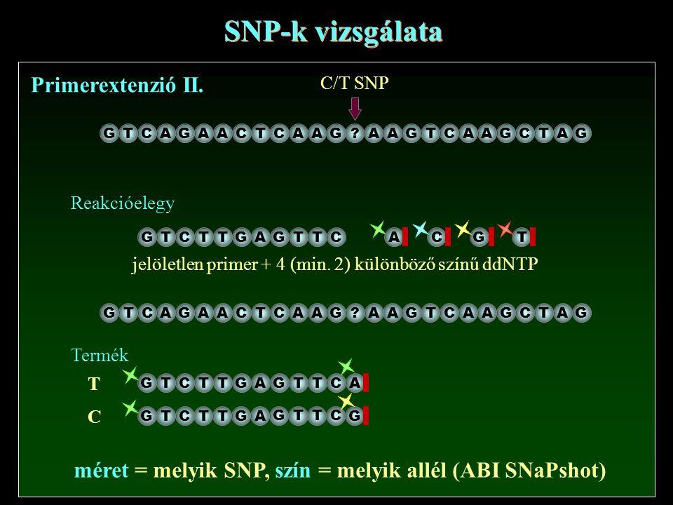 méret = melyik SNP, szín = melyik allél (ABI SNaPshot)