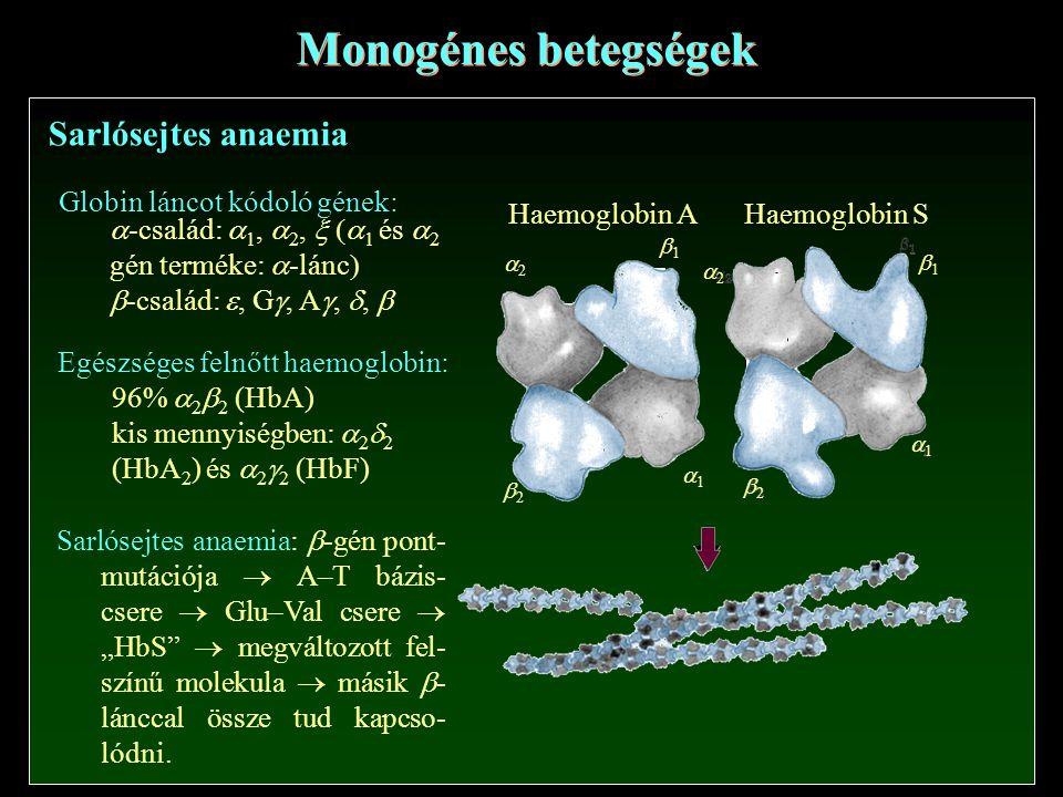 Monogénes betegségek Sarlósejtes anaemia Globin láncot kódoló gének: