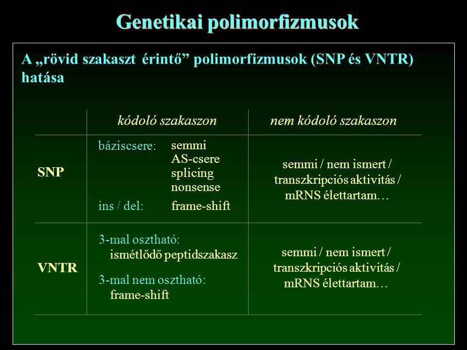Genetikai polimorfizmusok