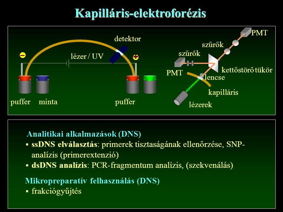 Kapilláris-elektroforézis Analitikai alkalmazások (DNS)