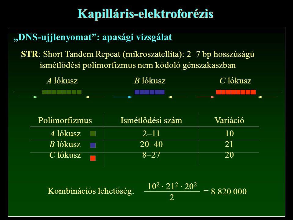 Kapilláris-elektroforézis
