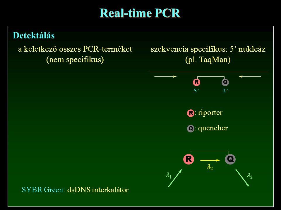 Real-time PCR Detektálás
