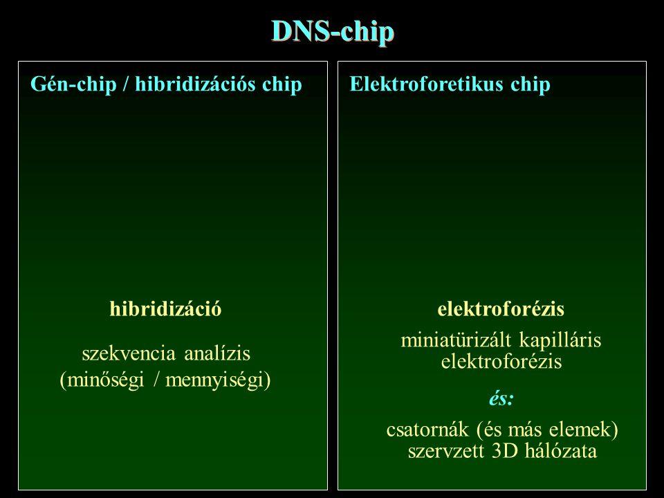 DNS-chip Gén-chip / hibridizációs chip Elektroforetikus chip