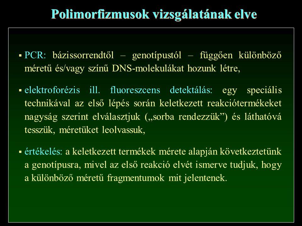 Polimorfizmusok vizsgálatának elve