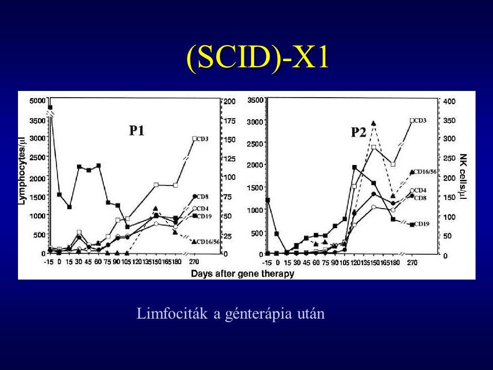 (SCID)-X1 Limfociták a génterápia után