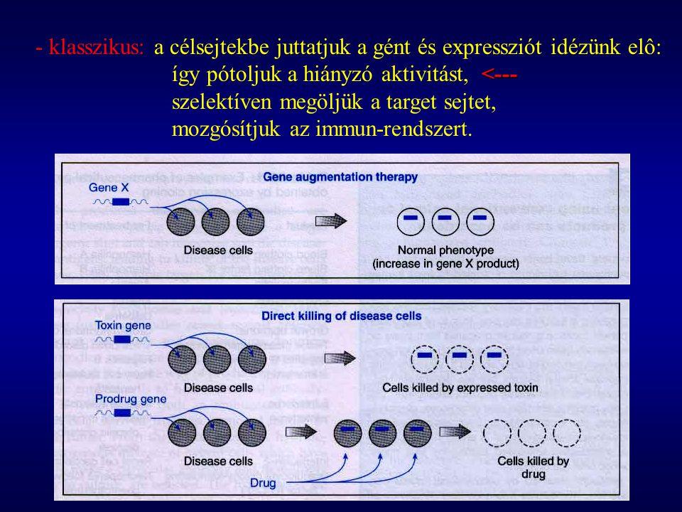 - klasszikus: a célsejtekbe juttatjuk a gént és expressziót idézünk elô: