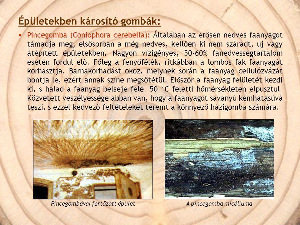 Épületekben károsító gombák: