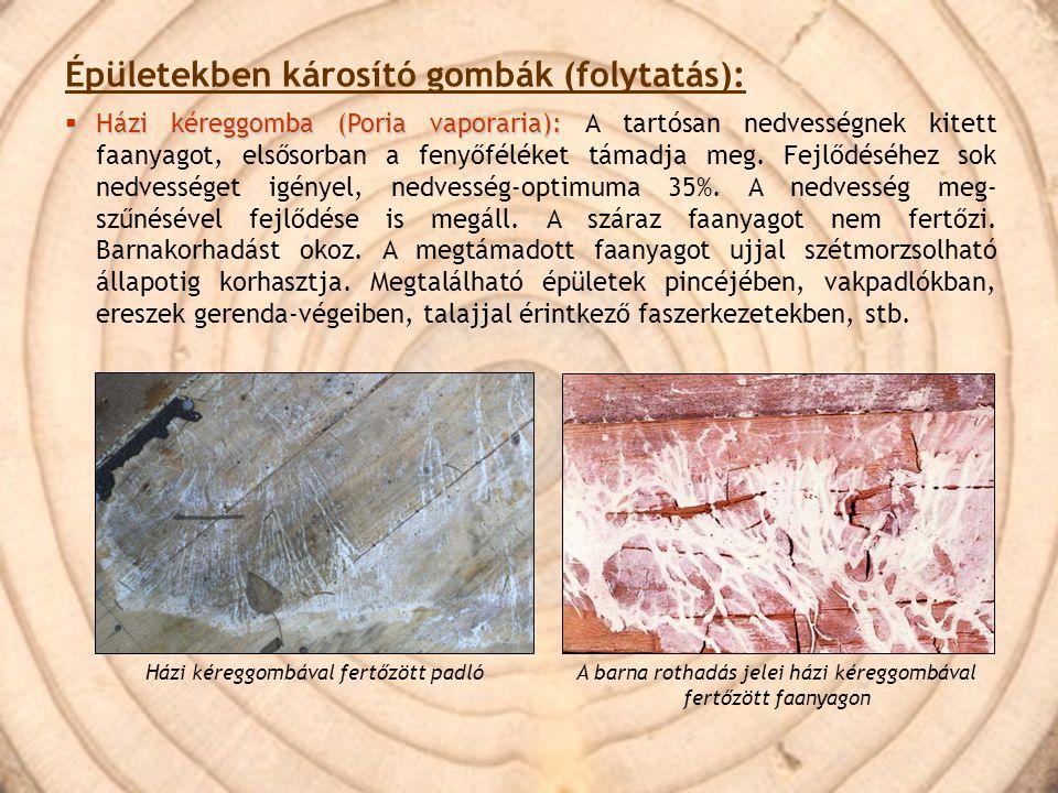 Épületekben károsító gombák (folytatás):