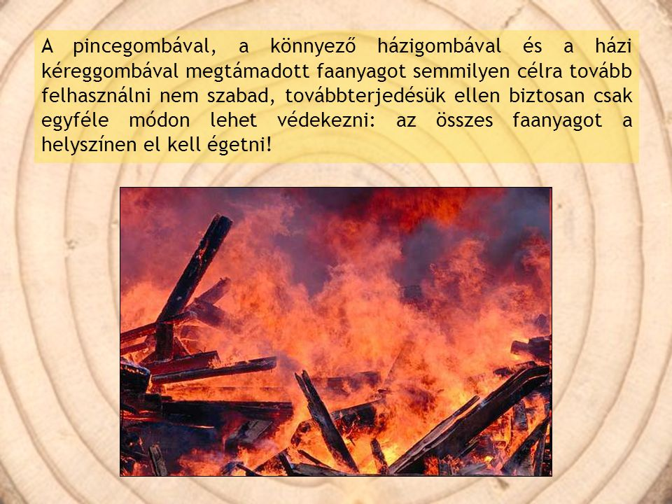 A pincegombával, a könnyező házigombával és a házi kéreggombával megtámadott faanyagot semmilyen célra tovább felhasználni nem szabad, továbbterjedésük ellen biztosan csak egyféle módon lehet védekezni: az összes faanyagot a helyszínen el kell égetni!