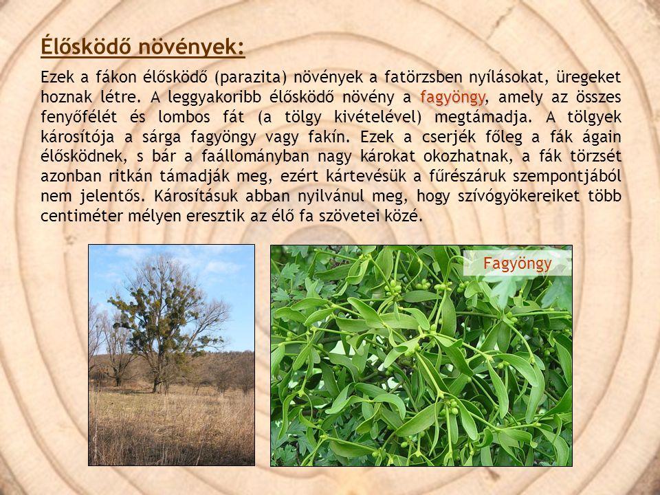 Élősködő növények:
