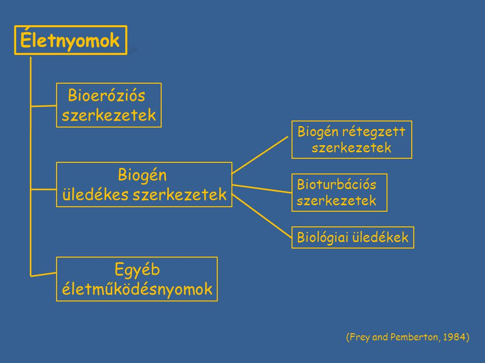 Életnyomok Bioeróziós szerkezetek Biogén üledékes szerkezetek Egyéb