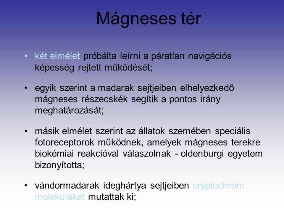 Mágneses tér két elmélet próbálta leírni a páratlan navigációs képesség rejtett működését;