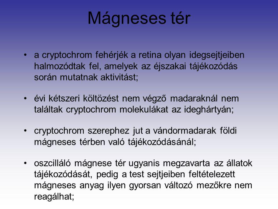 Mágneses tér a cryptochrom fehérjék a retina olyan idegsejtjeiben halmozódtak fel, amelyek az éjszakai tájékozódás során mutatnak aktivitást;
