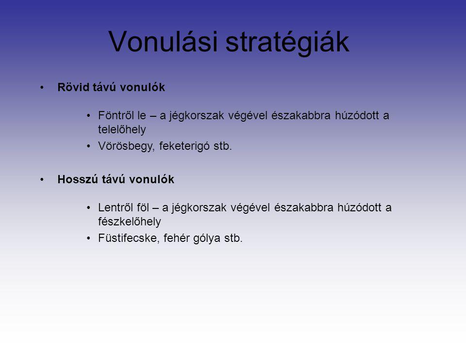 Vonulási stratégiák Rövid távú vonulók