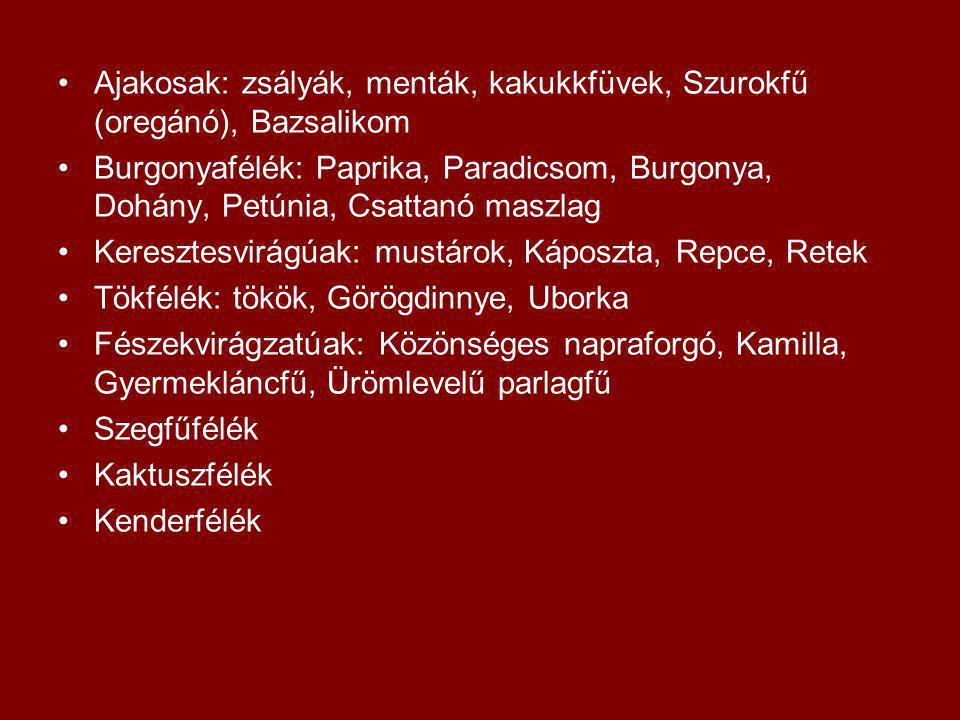 Ajakosak: zsályák, menták, kakukkfüvek, Szurokfű (oregánó), Bazsalikom