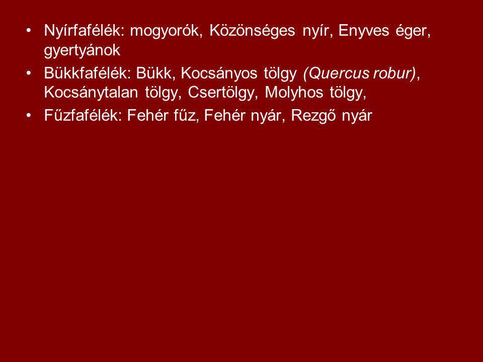 Nyírfafélék: mogyorók, Közönséges nyír, Enyves éger, gyertyánok