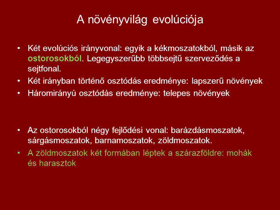 A növényvilág evolúciója