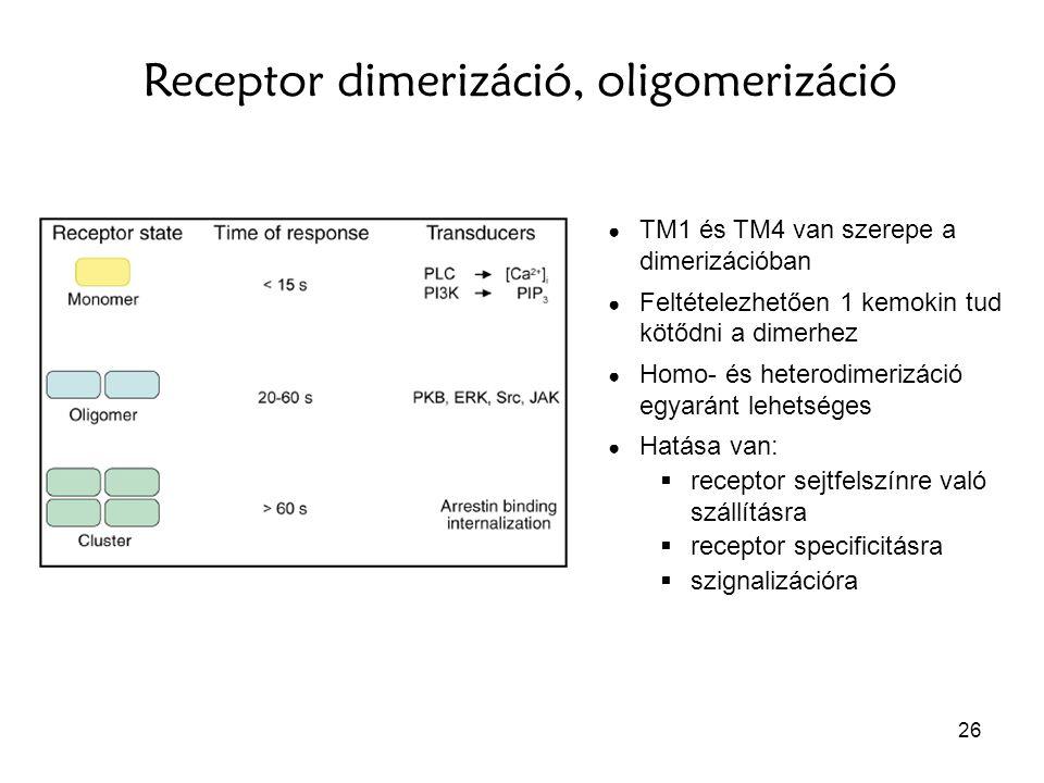 Receptor dimerizáció, oligomerizáció